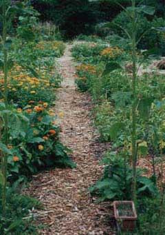 gemulchter Biogarten